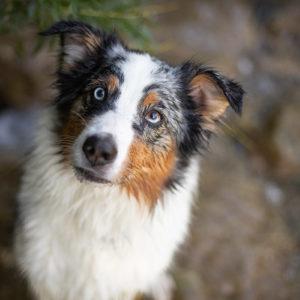 Wie viel kostet ein Hund? Anschaffung und laufende Kosten
