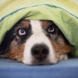 Ab ins Bett! Darum sollte Dein Hund im Bett schlafen