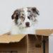 Wohnungssuche mit Hund - ein unmögliches Ding?