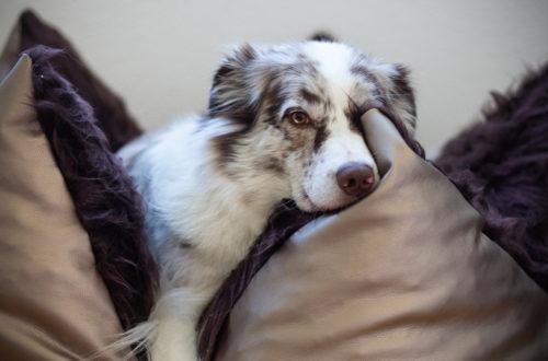 So lernt Dein Hund in Ruhe zu entspannen