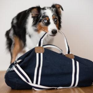 So gelingt der entspannte Umzug mit Hund