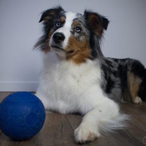 Einfache Beschäftigungsideen für den Hund