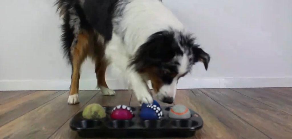 Beschäftigungsideen für den Hund ganz einfach selbst gemacht