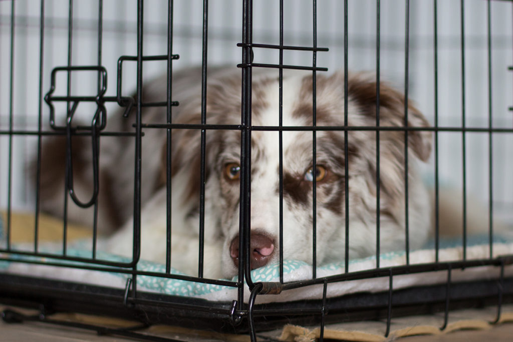 Das Training mit der Hundebox