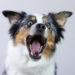 Selbstzweifel in der Hundeerziehung
